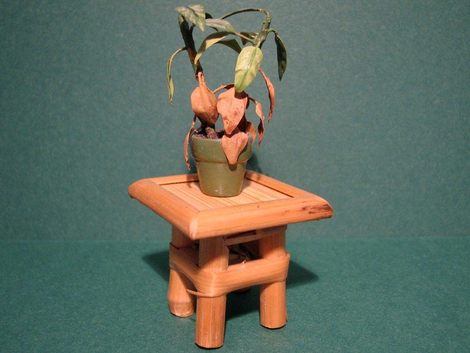 60-plant
